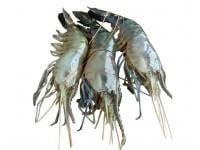 Shrimp (চিংড়ি) 1kg