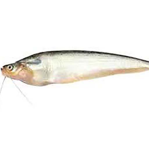 পাবদা মাছ (৮-১২ পিস) – ১ কেজি
