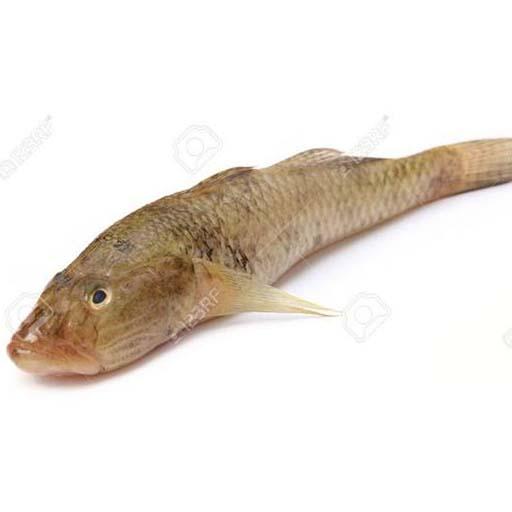 বেলে মাছ (৪-৫ পিস) – ১ কেজি